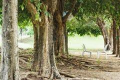 Drzewa w parku Obraz Stock