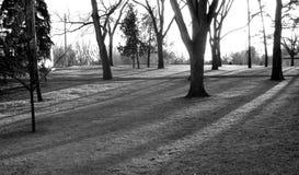 Drzewa w parku Zdjęcia Royalty Free