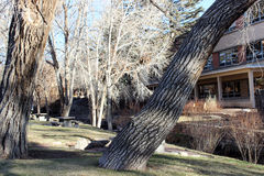 Drzewa w parku z tło budynkami Obrazy Stock