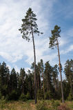 Drzewa w polanie fotografia stock