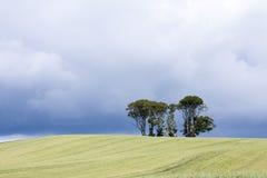 Drzewa w polu Obrazy Royalty Free