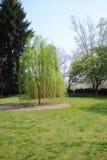 Drzewa w polu Obraz Stock