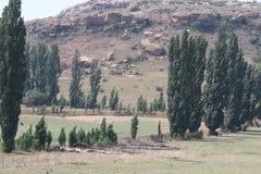 Drzewa w polu Fotografia Stock