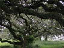 Drzewa w polu Obrazy Stock
