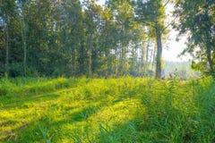Drzewa w polu w świetle słonecznym Obrazy Stock