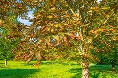Drzewa w polu w świetle słonecznym Zdjęcie Stock