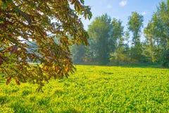 Drzewa w polu w świetle słonecznym Fotografia Royalty Free