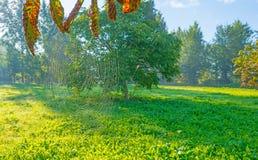 Drzewa w polu w świetle słonecznym Zdjęcia Stock