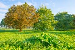 Drzewa w polu w świetle słonecznym Zdjęcie Royalty Free