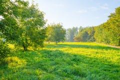 Drzewa w polu w świetle słonecznym Obraz Royalty Free