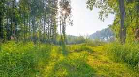 Drzewa w polu w świetle słonecznym Obrazy Royalty Free