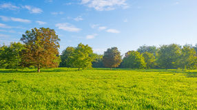 Drzewa w polu w świetle słonecznym Obraz Stock