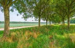 Drzewa w polu w świetle słonecznym Zdjęcia Royalty Free