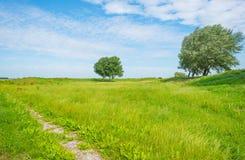 Drzewa w polu w lecie Zdjęcia Stock