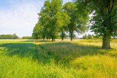 Drzewa w polu w lecie Zdjęcie Royalty Free