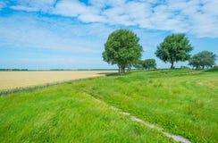 Drzewa w polu w lecie Fotografia Royalty Free