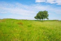 Drzewa w polu w lecie Fotografia Stock