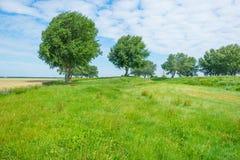 Drzewa w polu w lecie Zdjęcie Stock