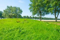 Drzewa w polu w lecie Zdjęcia Royalty Free