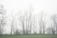 Drzewa w polu w spadku w ranku z mgłą Zdjęcie Royalty Free