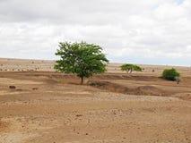 Drzewa w pustyni Fotografia Stock