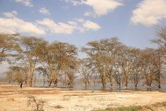 Drzewa w pustyni obrazy royalty free