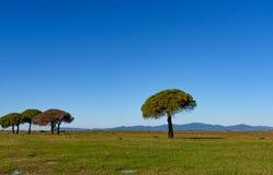Drzewa w równinie Obraz Stock