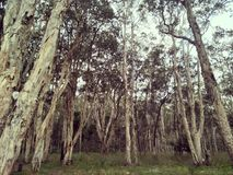 Drzewa w?r?d drzew obraz royalty free