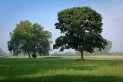 Drzewa w ranku świetle Fotografia Stock