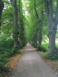 Drzewa w rzędzie Zdjęcie Royalty Free
