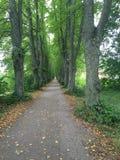 Drzewa w rzędzie Fotografia Royalty Free