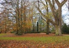 Drzewa w spadków kolorach Obraz Stock