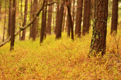 Drzewa w spadku Zdjęcie Royalty Free