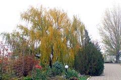 Drzewa w spadku Złota jesień zdjęcia royalty free