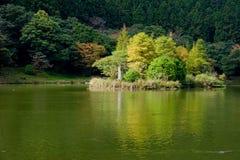 Drzewa w stawie Zdjęcia Royalty Free