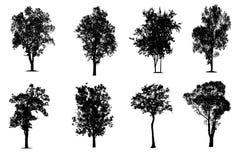 Drzewa w sylwetkach odizolowywają na Białym tle ilustracja wektor