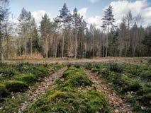 Drzewa w tre zieleni lesie obraz royalty free