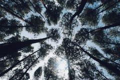 Drzewa w tropis ziemi Obraz Stock