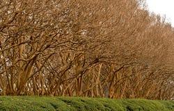 Drzewa w Wczesnej wiośnie z ranek chmurami fotografia stock