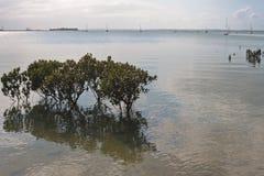 Drzewa w wodach przy marina Zdjęcia Royalty Free