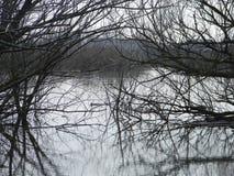 Drzewa w wodzie zdjęcie royalty free