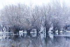 Drzewa w zamarzniętym jeziorze Zdjęcia Royalty Free