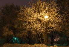 Drzewa w zima parku Obraz Stock