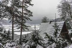 Drzewa w zimie Zdjęcie Stock