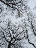 Drzewa w zimie zdjęcia stock