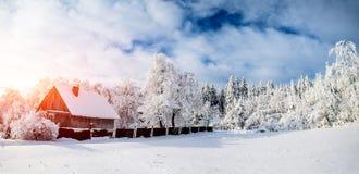 Drzewa w zimie Obraz Royalty Free