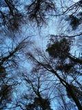 Drzewa w zimie obraz stock
