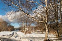 Drzewa w zimie w parku i drodze Zdjęcie Stock