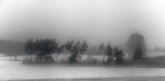 Drzewa w zimy mgle Zdjęcie Stock