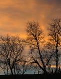 Drzewa w zmierzchu fotografia royalty free